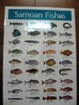 Samoan Fish