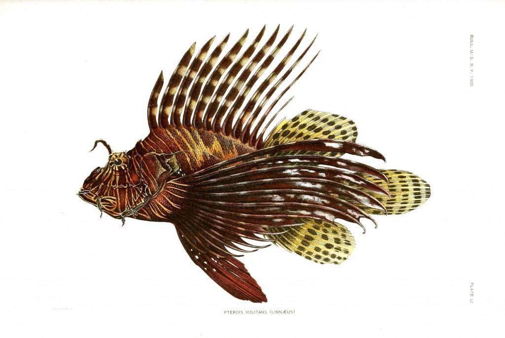 Samoan Fish Archives